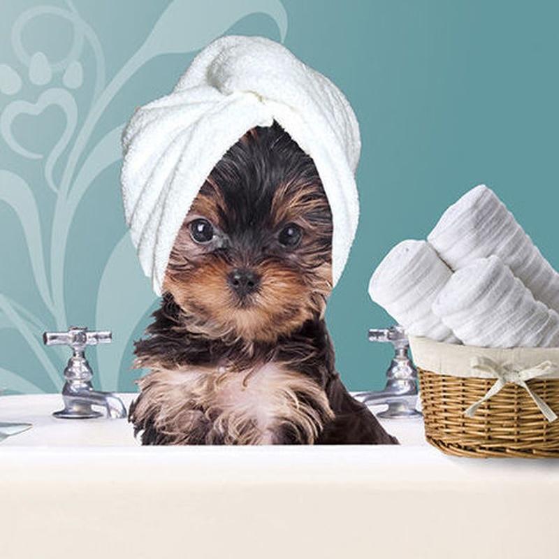 Peluquería canina y felina: Servicios de VIP'S