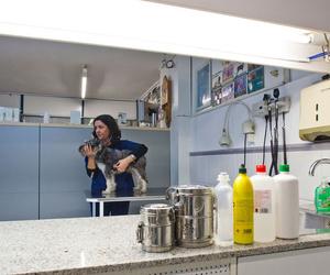 Galería de Veterinarios en Sant Just Desvern | Hospital Veterinario Desvern