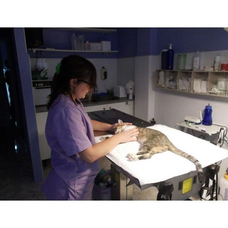 Medicina interna : Servicios de Clínica Veterinaria Vilavet