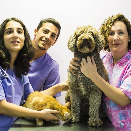 Clínica veterinaria especializada en dermatología en Tenerife