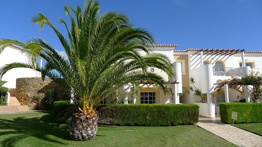 Las palmeras más sorprendentes