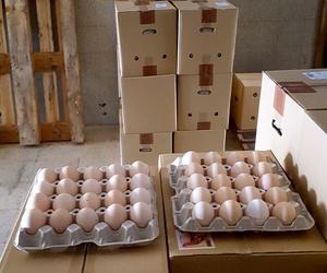 Huevos de primera calidad
