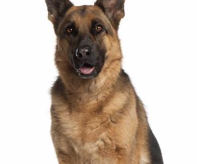 ¿Sabes cómo detectar si tu mascota tiene artrosis?