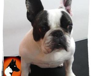 Tratamiento para perros de todas las razas