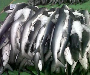 Mayoristas pescado congelado en  Pontevedra
