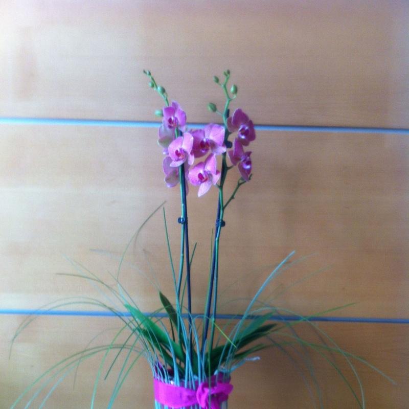 Phalenopsis en cristal