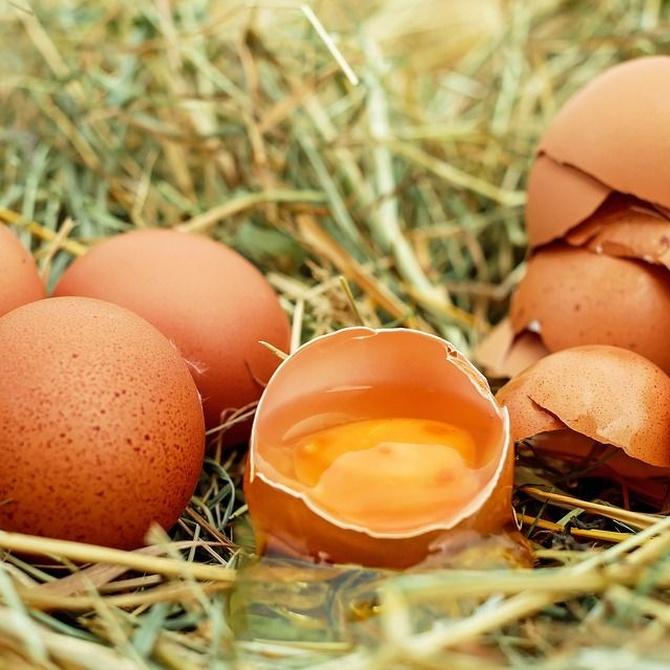Valores nutricionales y mitos de las claras de huevo