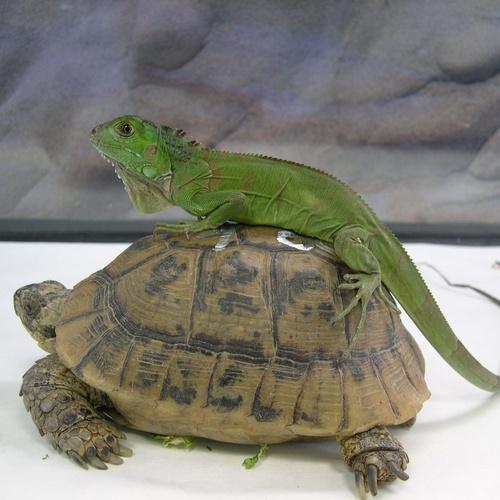 Animales veterinarios en Talavera de la Reina