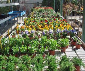 Jardinería en Navalcarnero, Madrid