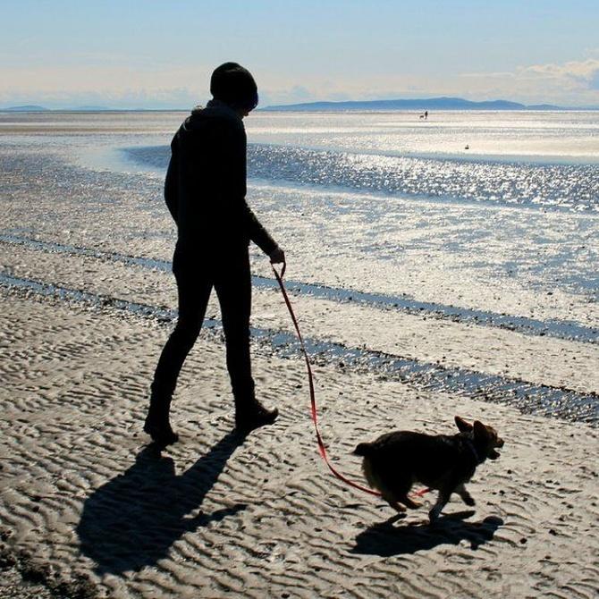 Consejos para disfrutar de un feliz paseo con tu perro