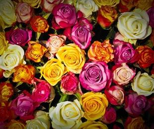 Una rosa es una rosa: el significado de cada color