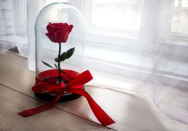 Rosa eterna
