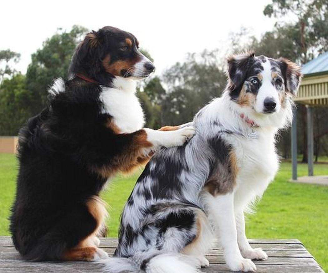La importancia de un centro de estética canina