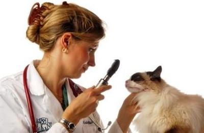 Todos los productos y servicios de Veterinarios: Clínica Veterinaria - Lab. Anatomía Patológica