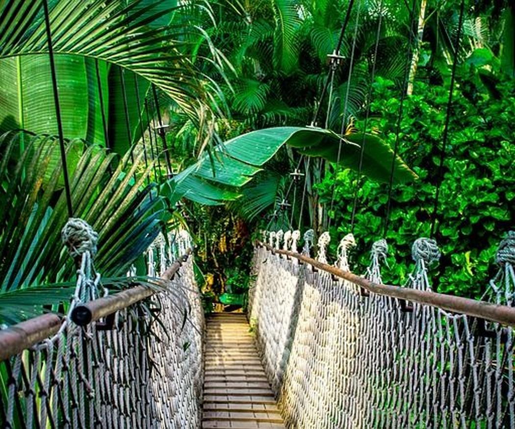 Cuidados básicos de las palmeras