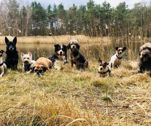 Refugio para perros en La Línea de la Concepción