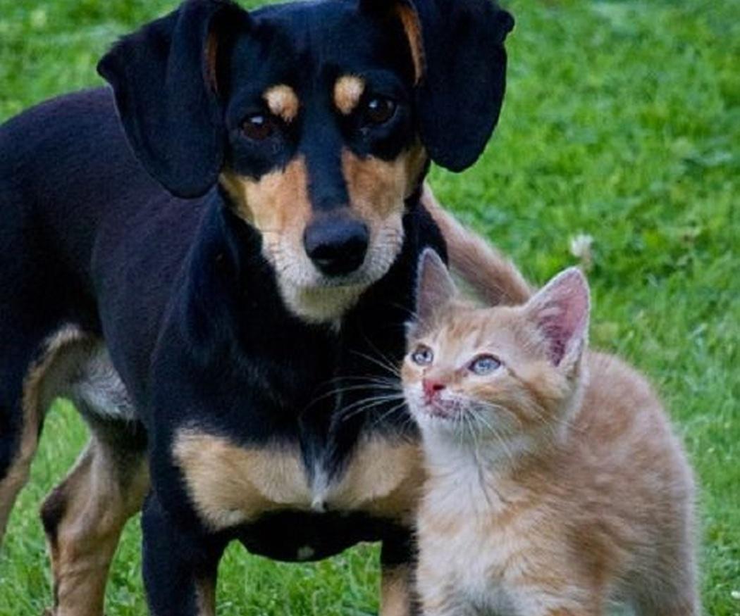 Intoxicaciones más comunes en perros y gatos