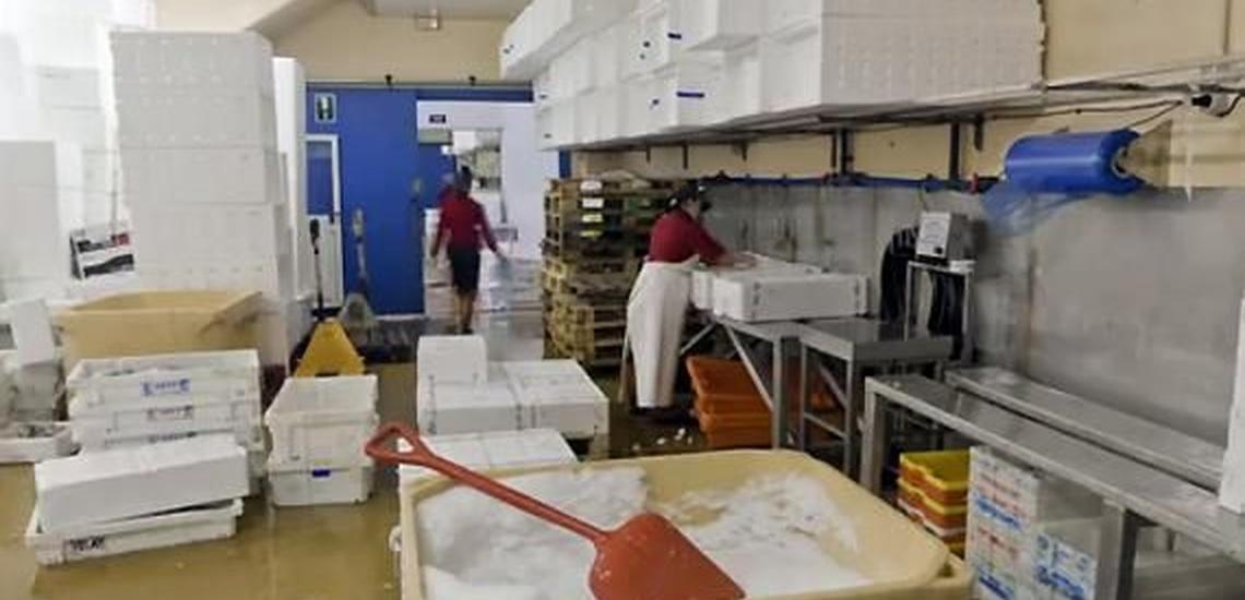 Pescado fresco en Pontevedra de la mejor calidad