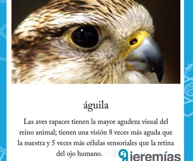 Noticia curiosa de la semana: Águila - Jeremías