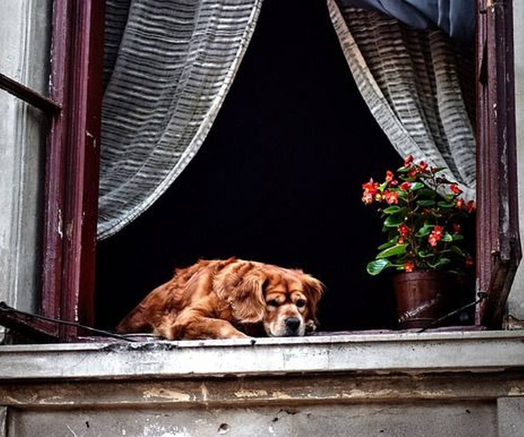 Obligaciones y derechos de los vecinos con mascotas