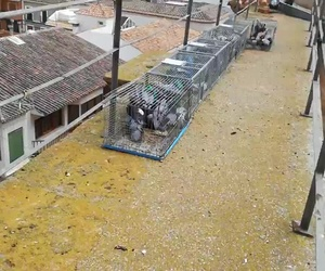 Control de plagas en Alcázar de San Juan | Juan Falcon