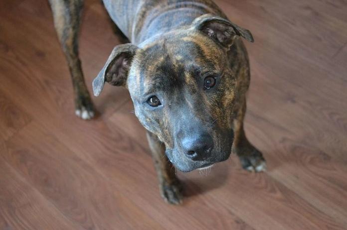 Animales potencialmente peligrosos: Nuestros Servicios de Reconocimientos Médicos Vecindario
