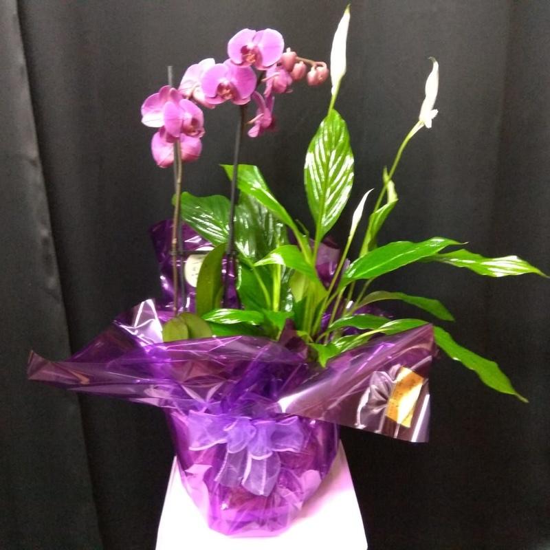 Plantas: Productos de Floristería Kiara