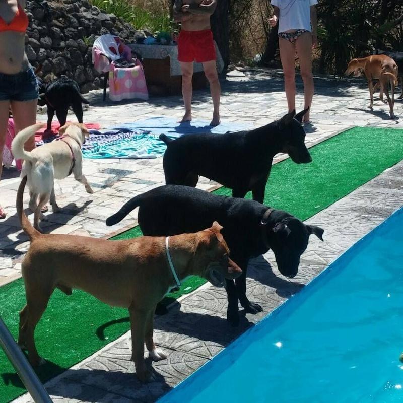 Piscina en verano: Servicios de Peludos Al Agua