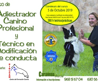Material de adiestramiento Accesorios y Complementos: Servicios de Piolcan Adiestramiento Canino y Centro de formación