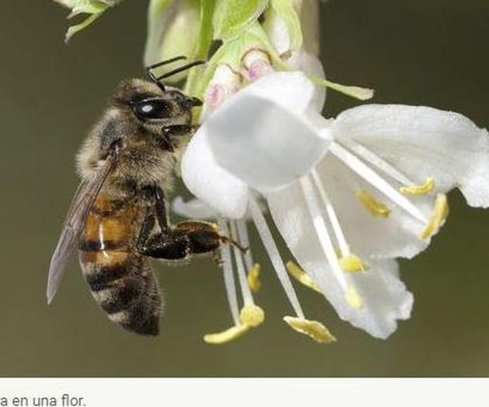 Europa prohíbe totalmente el uso de insecticidas dañinos para las abejas