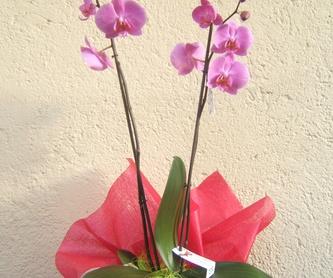 Sencilla y bonita cesta de plantas de interior:  de Floristería Pétalos