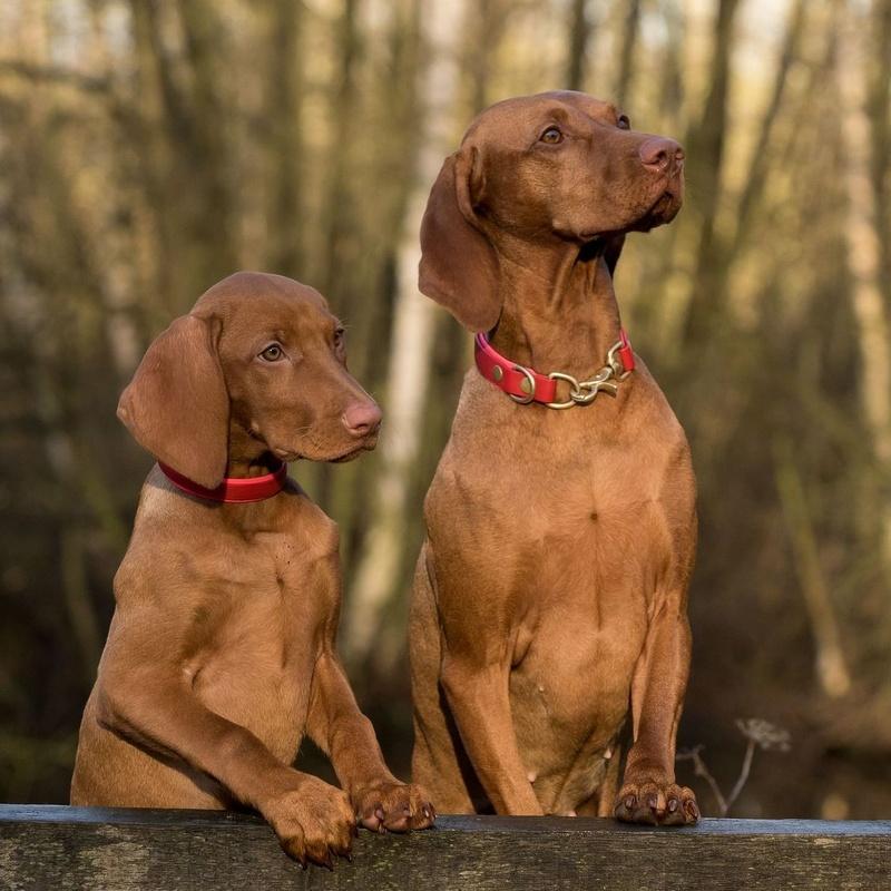 Larga estancia: ¿Qué hacemos?  de Guardería Canina Estíbaliz