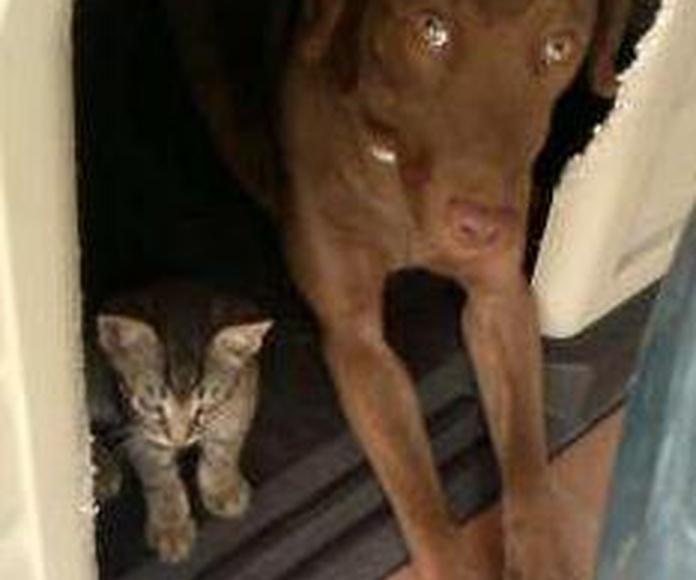 Curro el gatito y Nilo