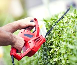 Jardineria i medi ambient