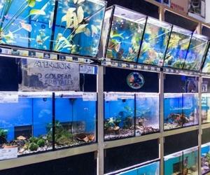 acuarios, peces, roedores, serpientes, animales exóticos, en Paterna Valencia