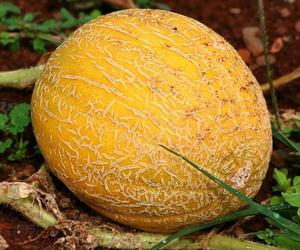 Todos los productos y servicios de Frutas y Hortalizas: La Huerta de Leo