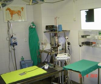 Chuches....: Servicios de Bris Clínica Veterinaria - Albaitari Klinika