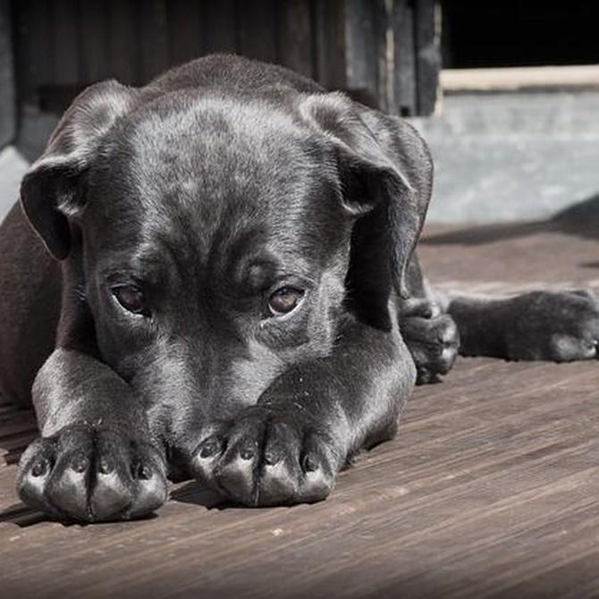Lo que tu perro no puede comer