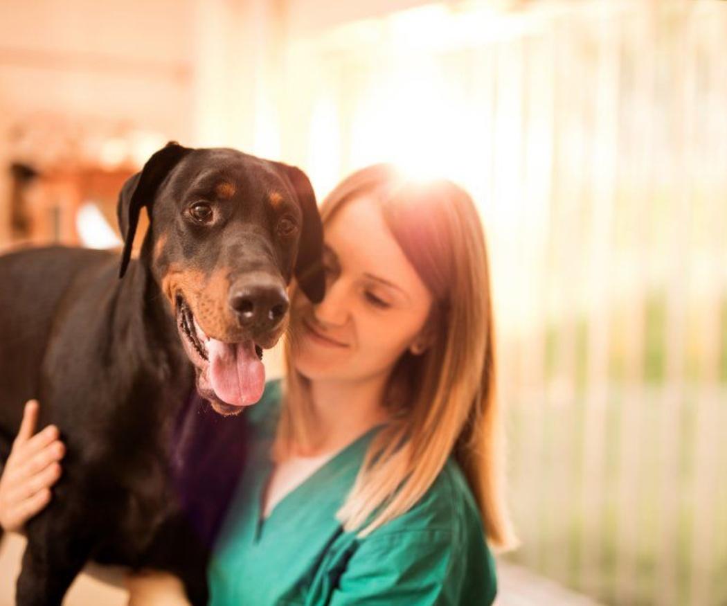 La importancia de contar con un veterinario de confianza