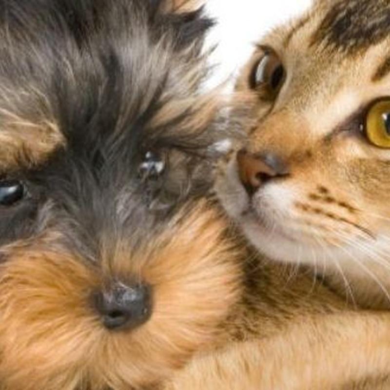 Mascotas: Productos de Agroquímica Balear
