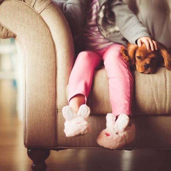 Las mascotas y el tapizado de tu sofá