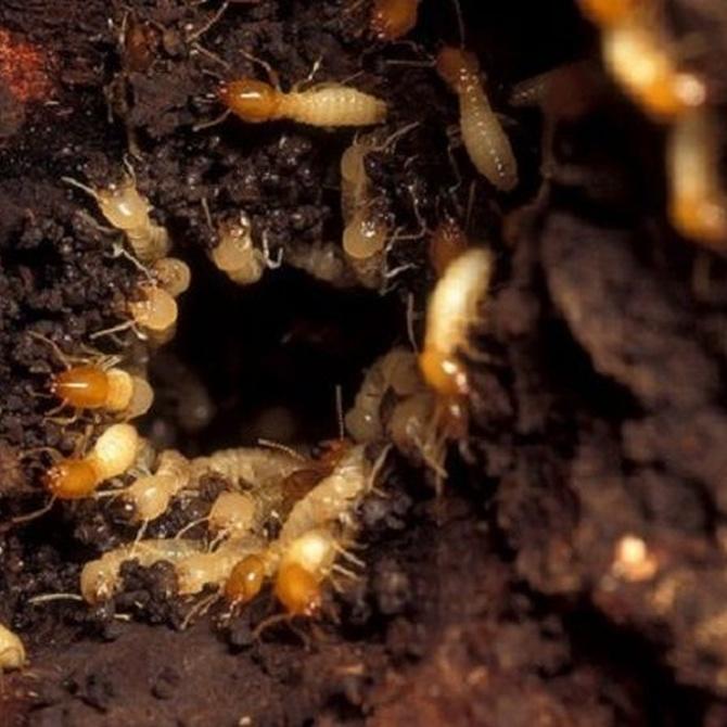 ¿Cómo prevenir la aparición de termitas en nuestro hogar?