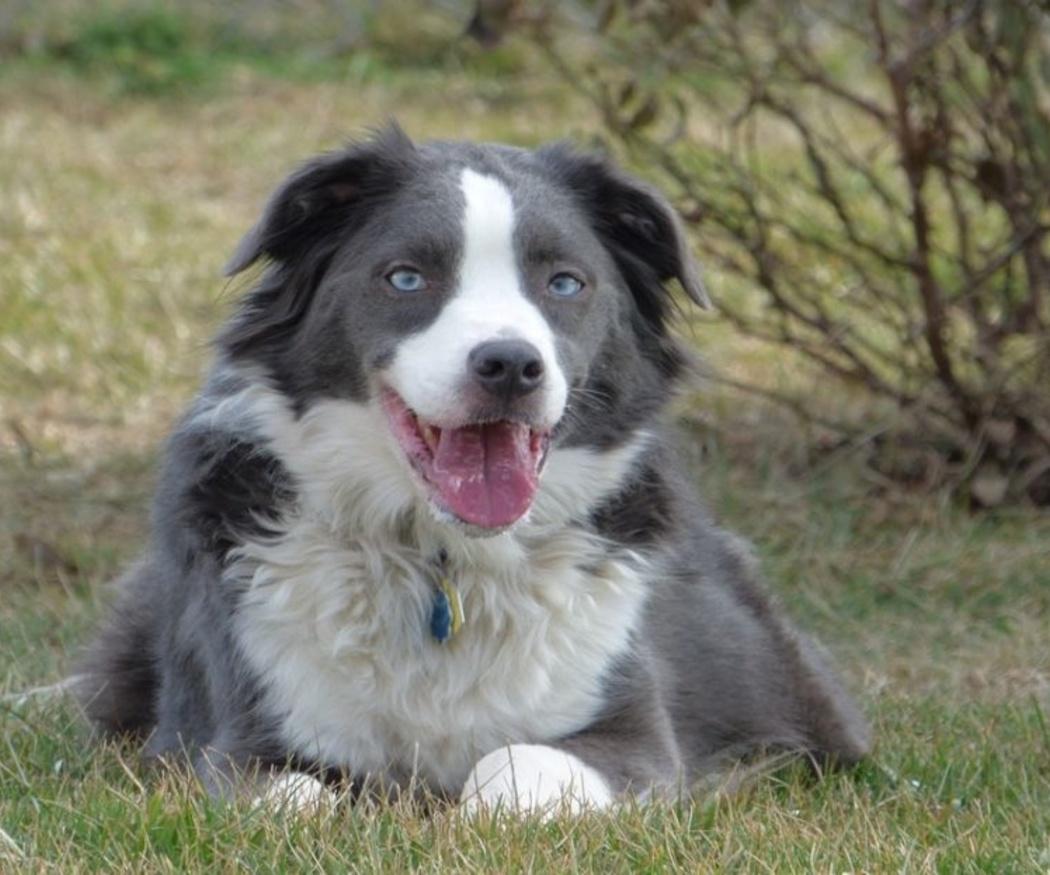 Las razas de perro con las que irás menos a Urgencias