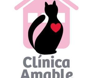 """Renovado el Certificado de """"Clínica Amable con los Gatos"""""""