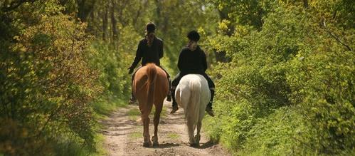 Paseos a caballo para todas las edades y niveles!!