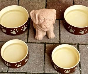 Accesorios para perros que debes tener en casa (I)