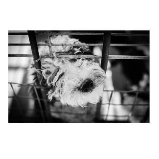 Problemática en la compra de perros