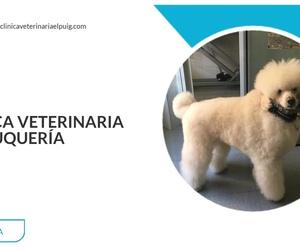 Oftalmología veterinaria en Valencia | Clínica Veterinaria El Puig