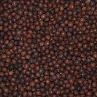 Leguminosa: Agroceres, S.L.