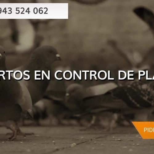 Desinfección y desratización en Guipúzcoa: Oiarso Control de Plagas